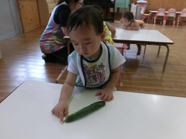 夏野菜を触ってみたよ!うさぎぐみ